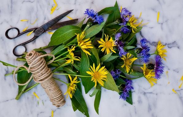 Picture chamomile, bouquet, twine, scissors, cornflowers, doronikum