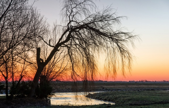 Picture field, landscape, sunset, nature, tree