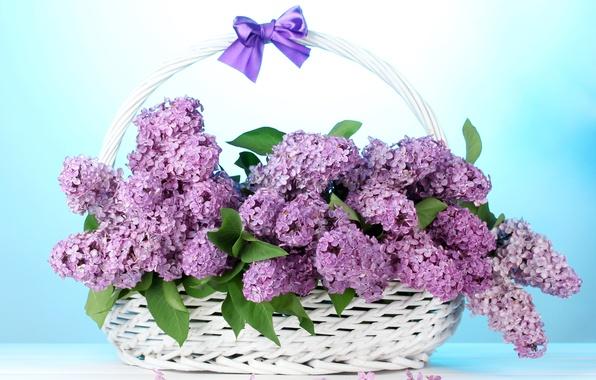 Picture flowers, bouquet, bow, basket, lilac