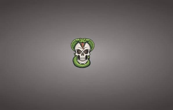 Picture skull, snake, minimalism, head, skeleton, Cobra