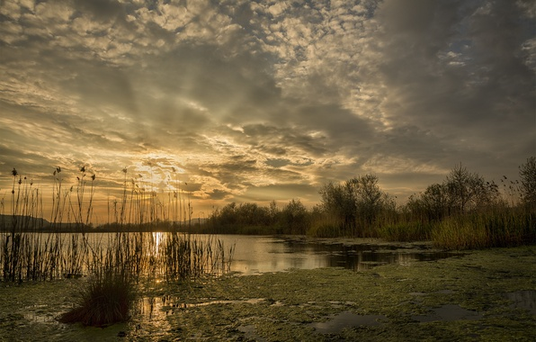 Picture The sun, Water, Nature, Clouds, Lake, Trees, Dawn, Rays