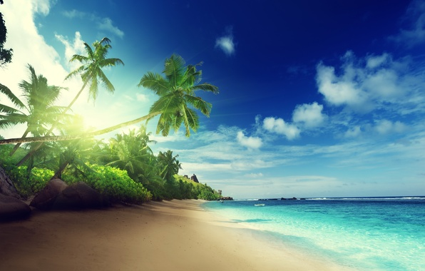 Picture sand, sea, beach, the sun, tropics, palm trees, the ocean, shore, island, summer, beach, sea, ...