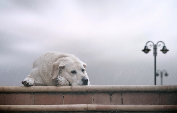 Picture sadness, each, dog