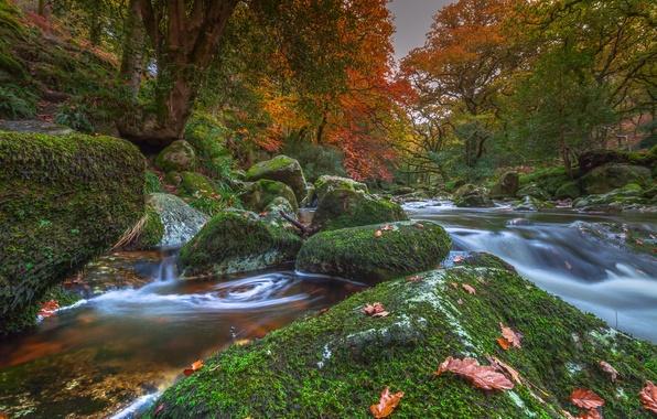 Picture autumn, trees, river, stones, England, moss, Devon, England, Devon, Dartmoor National Park, Dartmoor national Park