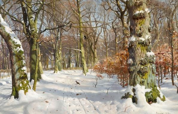 Picture winter, light, snow, trees, landscape, birds, traces, Park, moss, picture, crows, bark, grove, Peder Mork …