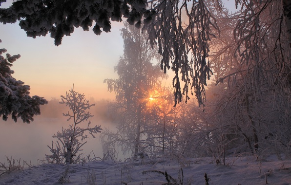 Picture winter, forest, the sun, rays, snow, morning