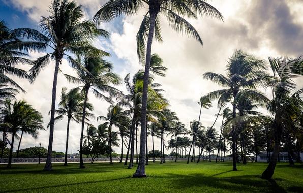 Picture the sky, grass, Park, Palma, palm trees, cloud, art, grass, beach, USA, sky, cloud, art, …