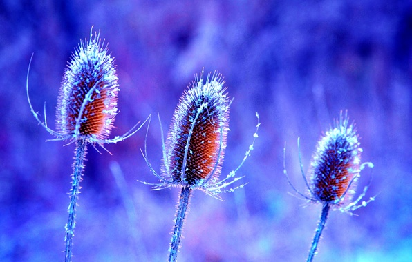 Picture flower, nature, plant, stem