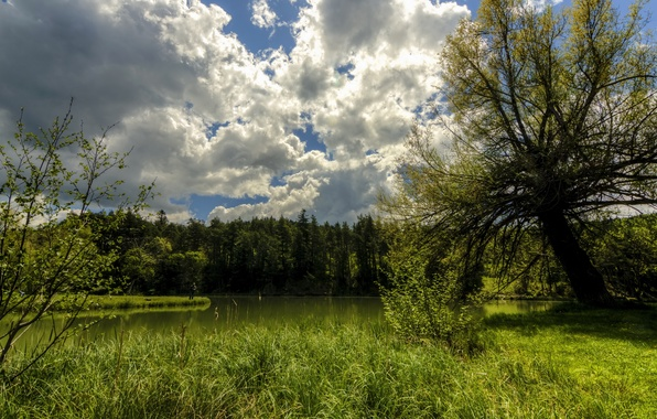 Picture forest, summer, the sky, grass, clouds, trees, lake, the reeds, shore, France, fisherman, Thorenc