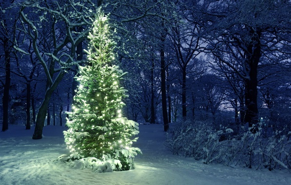 Picture light, Spruce, garland, snow.