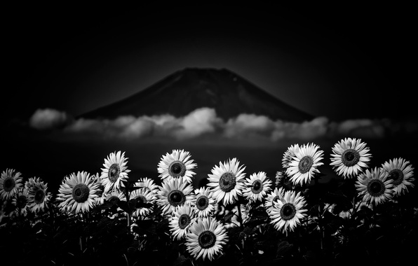 Picture flowers, mountain