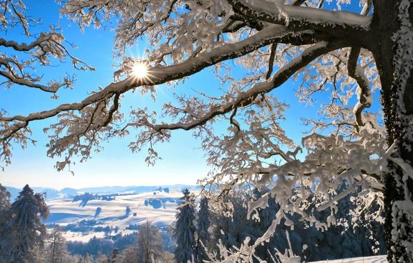 Picture winter, the sun, snow, mountains, branches, tree, Switzerland, Switzerland
