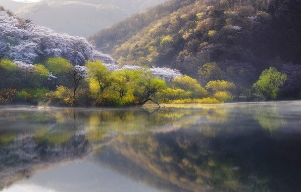 Picture nature, lake, river, spring, Japan