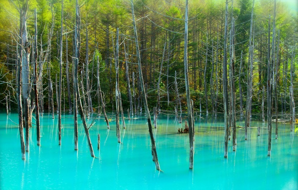 Picture forest, trees, lake, trunks, blue