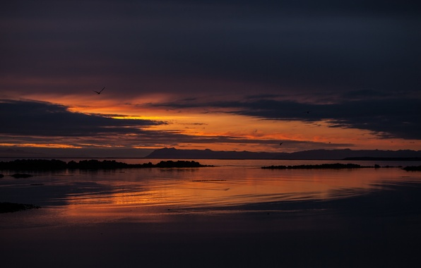 Picture the sky, sunset, birds, orange, clouds, the ocean, shore, the evening, Bay, Iceland