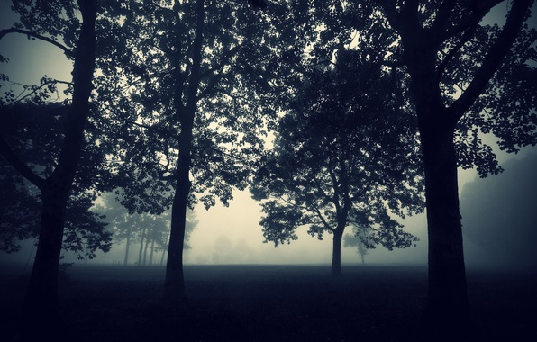 Picture Nature, The evening, Fog, Trees, Forest, The darkness, Wallpaper, Twilight, Darkness, Tree, Mystic, Mist