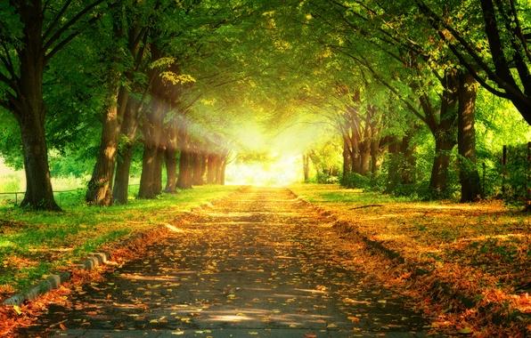 Photo wallpaper road, leaves, trees, landscape, sunset, nature, beautiful, road, trees, landscape, nature, sunset, beautiful, leaves, majestic, ...