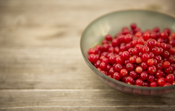 Picture plate, red, currants, photo, photographer, markus spiske