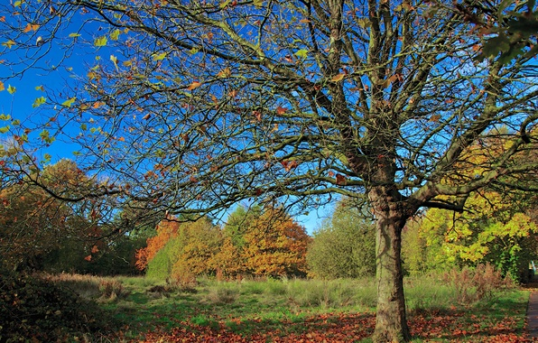 Picture autumn, forest, the sky, leaves, trees, Park