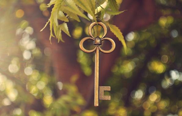 Picture greens, leaves, light, metal, branch, key, bokeh