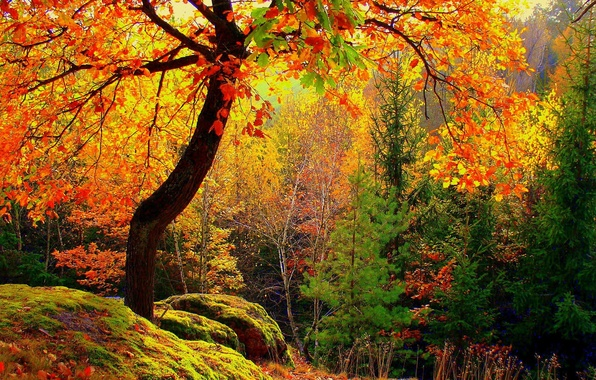 Picture autumn, forest, leaves, trees, moss, yellow