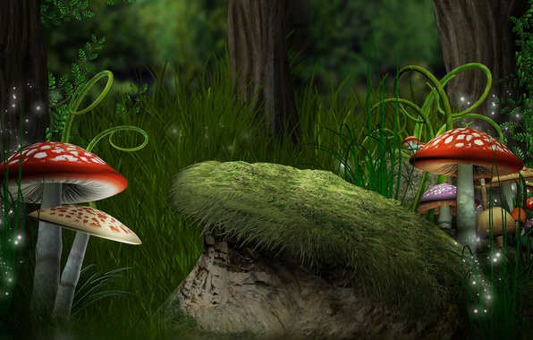 Picture forest, grass, mushrooms, ferns, Amanita, forest, Magic, mushroom