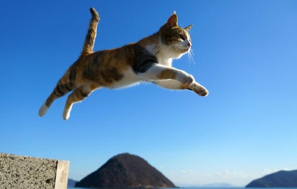 Picture cat, cat, jump