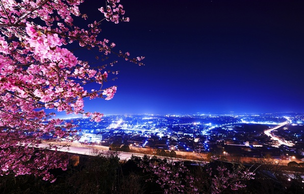 wallpaper lights building night cherry blossoms images