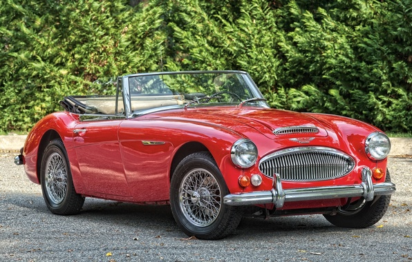 Picture red, background, Roadster, classic, the bushes, the front, 1966, Roadster, Austin Healey, Austin Healey, BJ8, …