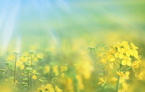 Picture macro, flowers, nature, yellow