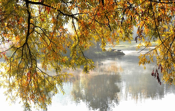 Picture autumn, trees, lake, Park, branch