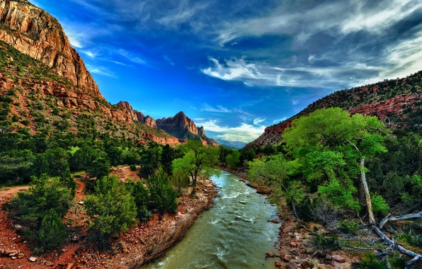 Picture stones, rocks, gorge, Utah, USA, river, Zion National Park, the bushes, Utah