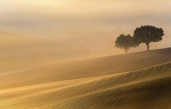 Picture field, light, trees, landscape, fog, morning