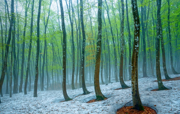 Picture forest, snow, trees, fog, spring, Japan, beech, Tokamachi
