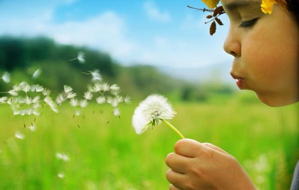 Picture summer, green, Dandelion, girl