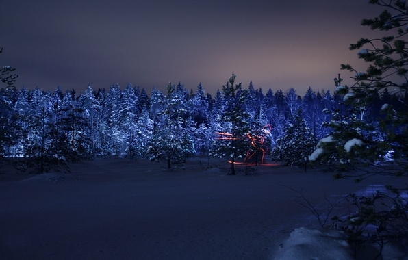 Picture winter, forest, night, silhouette, Olympics, skier