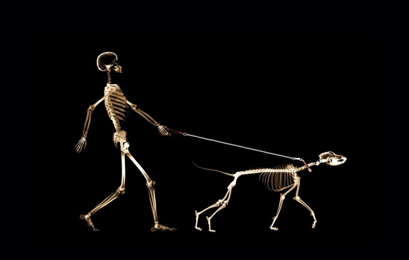 Picture people, dog, leash, x-ray
