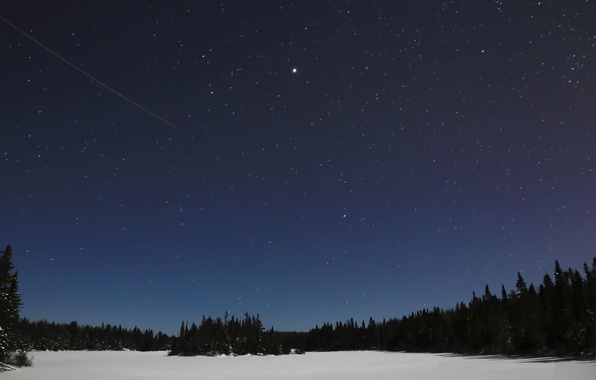 Picture the sky, stars, snow, trees, landscape, night, nature, silhouettes