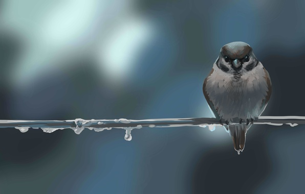 Picture drops, background, bird, branch, art, Sparrow