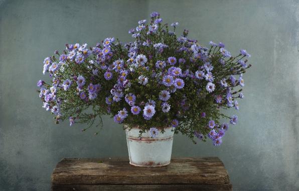 Picture autumn, lilac, bouquet, asters