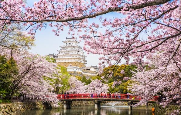 Picture bridge, river, spring, Japan, Sakura, pagoda, flowering