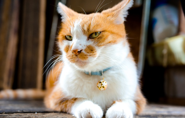Photo wallpaper cat, cute, look, mustache
