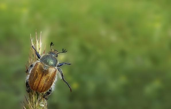 Picture green, beetle, minimalism, hi