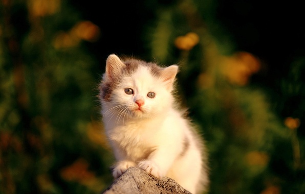 Picture white, Kitty