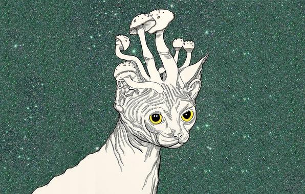 Picture cat, mushrooms, art, Sphinx, psychedelic