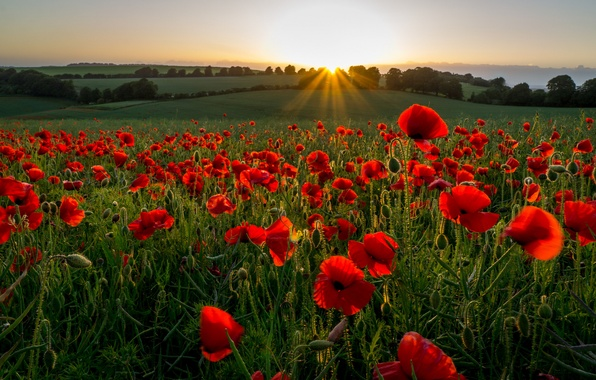 Picture field, rays, sunset, flowers, hills, Maki, the evening, meadow