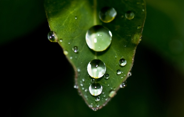 Picture drops, sheet, plant, size, sharpness