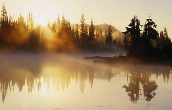 Picture river, trees, morning, fog, sunrise