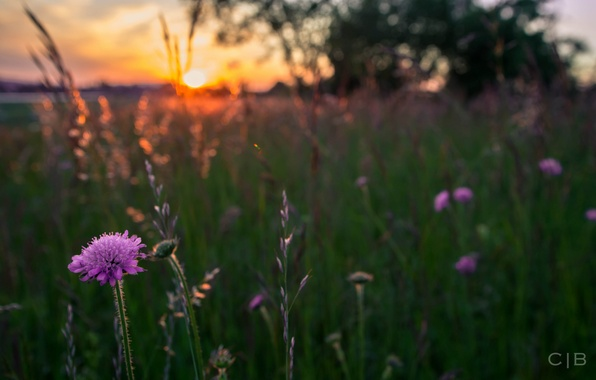 Picture greens, grass, the sun, macro, sunset, flowers, nature, blur, spikelets