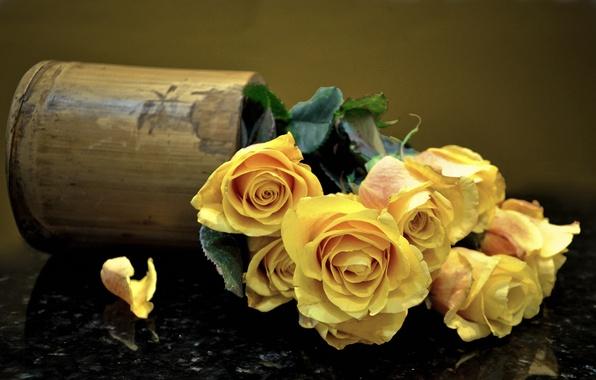 Picture roses, bouquet, petals, vase